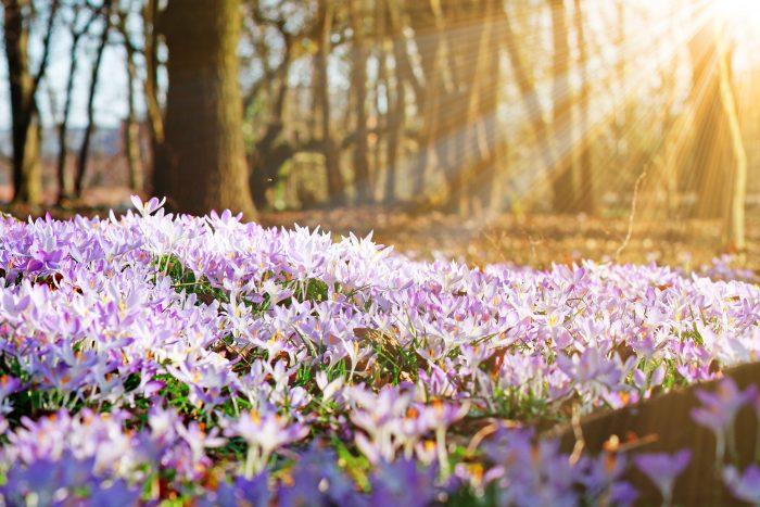Frühlingsangebot zum Schildhauer